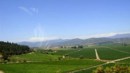 Valle de Casablanca (Chile): una parada de la ruta del vino