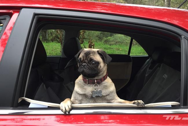 Todos los miembros de tu familia merecen un lugar seguro en tu coche, incluso los de otra especie