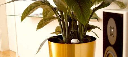 Sensor Wi-Fi para plantas