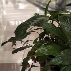 Foto 4 de 29 de la galería blackberry-key2-fotografias en Xataka