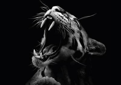Animales y fotografía en blanco y negro, una combinación de infinita belleza