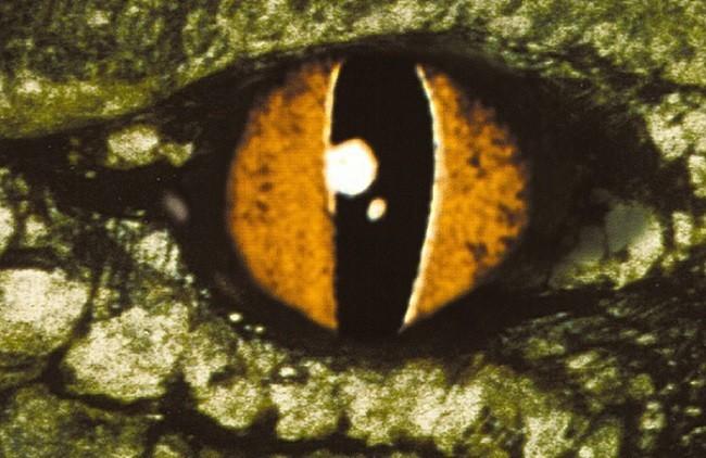 Imagen con el cartel de 'Cocodrilo'