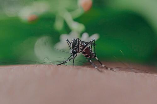 Las mejores mosquiteras según los comentaristas de Amazon