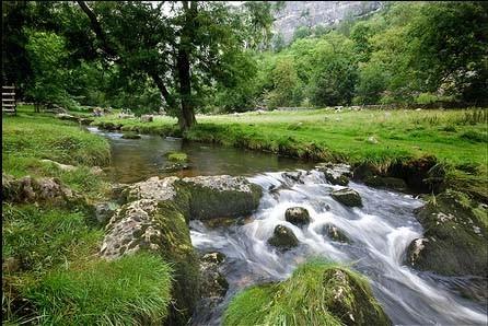 Foto de Verde Yorkshire (5/8)