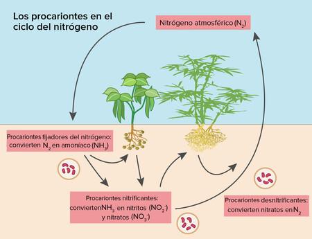Ciclo Del Nutrogeno