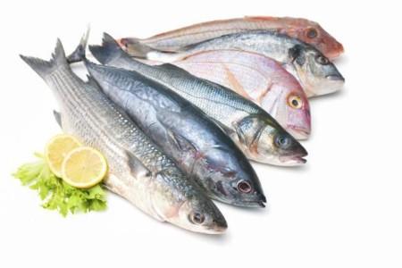 Resultado de imagen para imagenes pescados