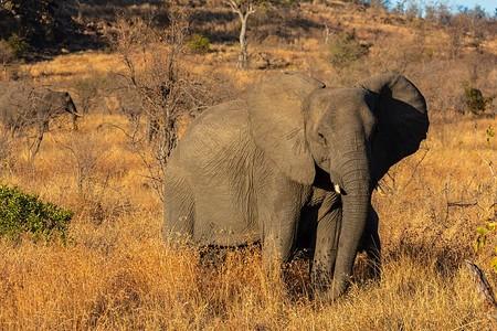 El mamífero terrestre más grande del mundo (y el que fue más grande)