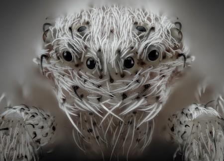 6 Javier Ruperez Hairy Spider