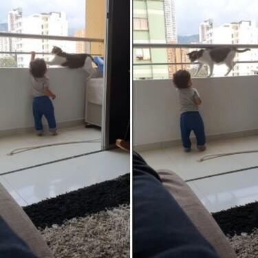 Un gato protector evita que un bebé se suba al balcón y el vídeo viral conmueve a todos