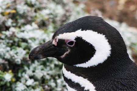 Faunia ¡pasa una noche con los pingüinos!