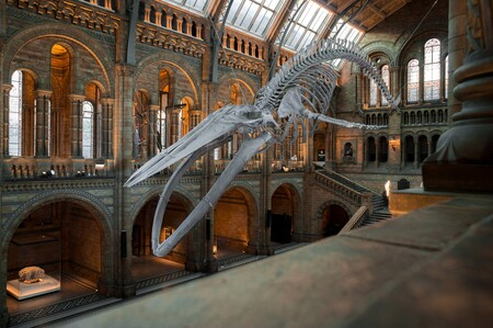 National History Museum 4314035 1920