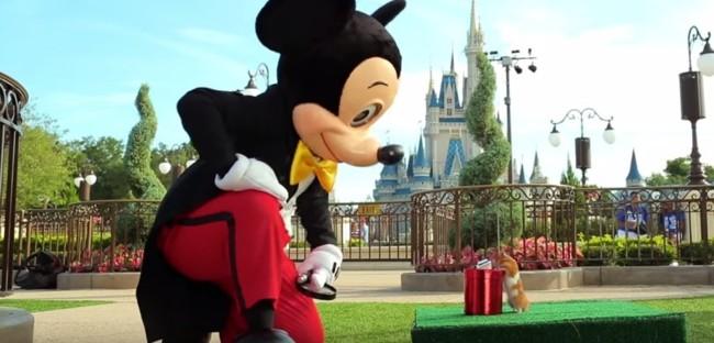 Así de bien se lo pasó un hamster visitando Disney World