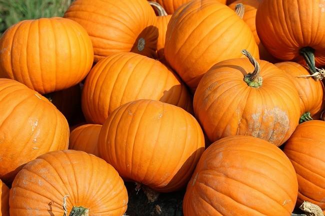 Pumpkins 457716 1280