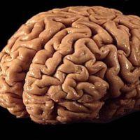 Una pastilla es la gran esperanza para curar las conmociones cerebrales