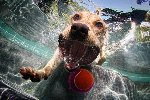 Foto de Sorprendentes fotografías caninas bajo el agua (5/7)