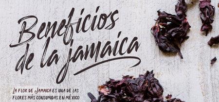 Los 9 beneficios de la Flor de Jamaica.Infografia