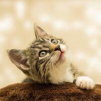 Se han identificado cinco formas distintas de relación gato-dueño: desde 'Relación abierta' a 'Amistad'