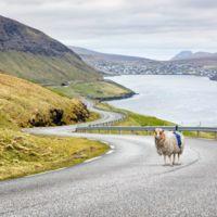 Hartos de esperar a Google, en las Islas Feroe están mapeando sus carreteras con ovejas
