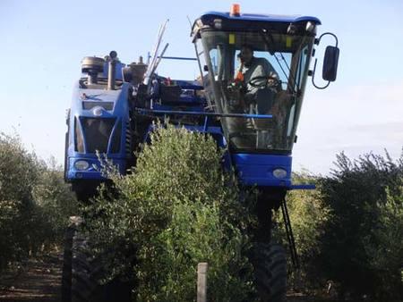 Fiesta del aceite nuevo en La Boella 2009