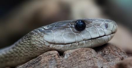Snake 653644 640