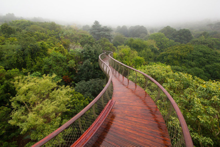 Tree Canopy Walkway Path Kirstenbosch National Botanical Garden 1