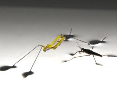 Este robot copia a los insectos para poder flotar y saltar sobre el agua