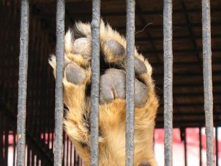 No a los circos que utilizan animales
