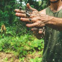 """Cuando unos tomates orgánicos se convierten en un """"atentado"""" contra el clima: lo que sabemos del polémico estudio de Cranfield"""