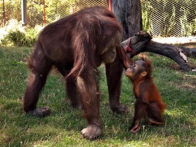 Zoo Aquarium de Madrid ofrecerá charlas informativas del 10 al 16 de noviembre y un curso monográfico sobre primates