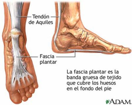 Anatomía fascia plantar