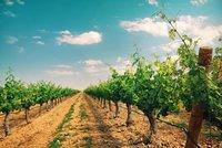 La huella de carbono en el vino de Matarromera