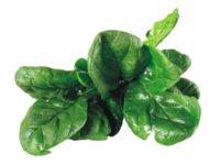 Espinaca: una fuente de calcio en el mundo vegetal