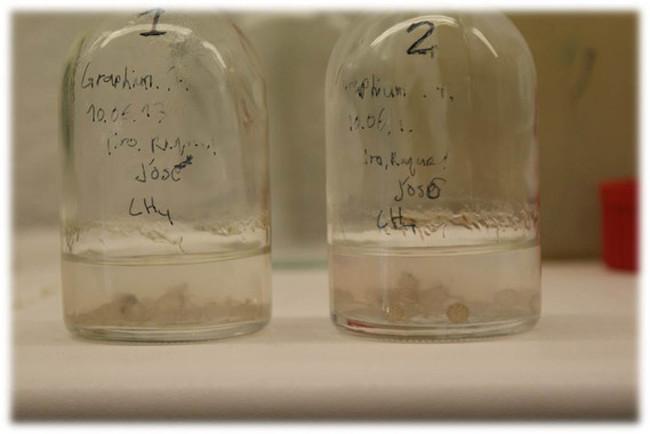 Hongos para degradar metano: se demuestra que es posible