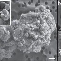 En las profundidades del hielo antártico se encuentra un minera común en Marte