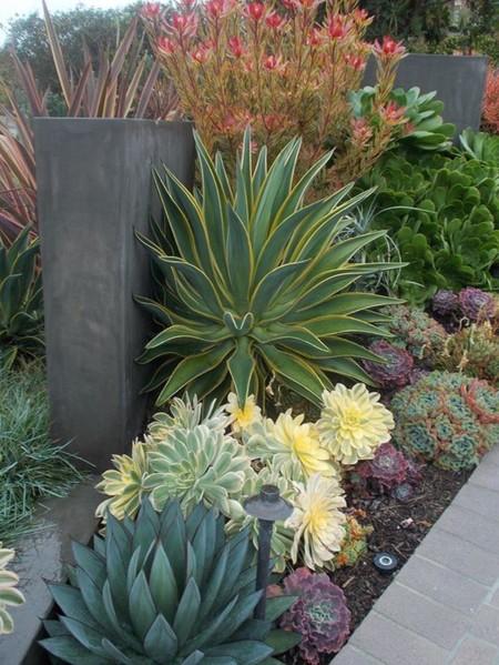Varias Pitas Cactus