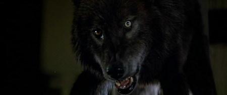 'Lobos humanos', hombres lobo con mensaje