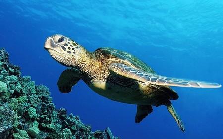 Tortuga Mar Contaminacion Plastico Mexico
