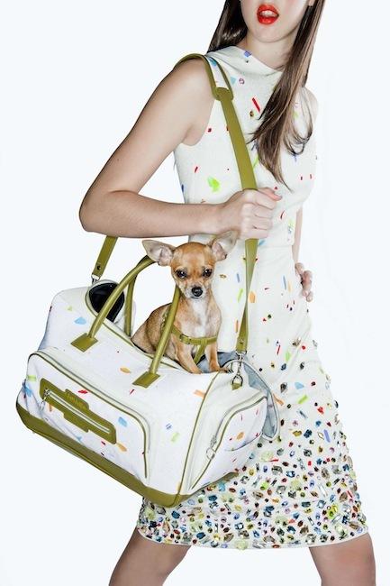 Colección de viaje para mascotas de David Delfín para Royal Canin