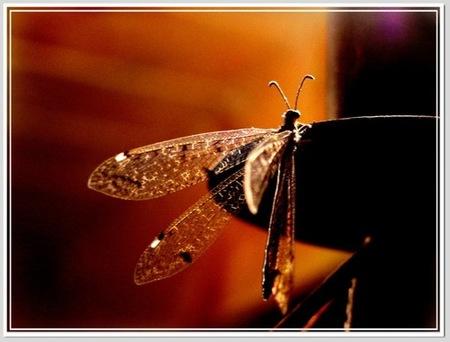 fotografias-de-insectos-18.jpg