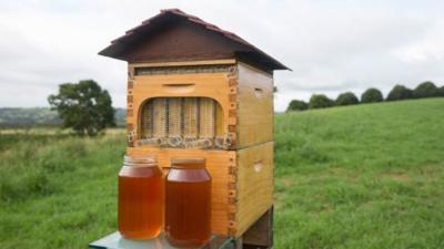 El diseño de esta colmena permite recoger miel directamente en el envase