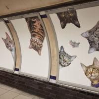 CatsNoAds: una acción para que las estaciones de metro sean más bonitas, con menos anuncios y más gatitos