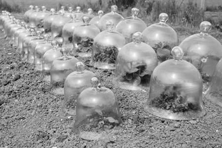 Campanas de cristal, de menaje a adorno