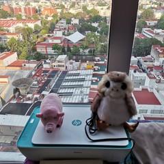 Foto 12 de 12 de la galería fotos-del-huawei-p40-lite en Xataka México