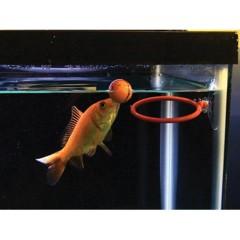 Foto 2 de 4 de la galería adiestramiento-para-peces en Trendencias Lifestyle