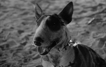 'Frankenweenie' de Tim Burton será película