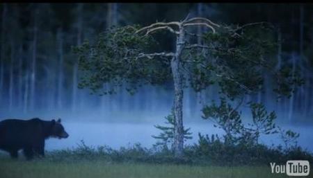 Primeros vídeos grabados con la Nikon D3s