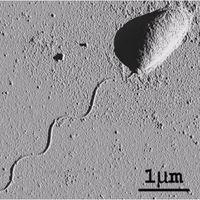 Este es el pegamento natural más fuerte que se ha descubierto y puede adherirse a casi cualquier superficie