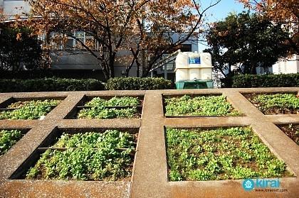 Minihuertos urbanos en Japón