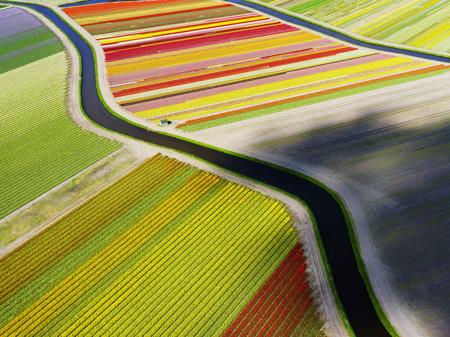 Netherlands Voorhout Tulip Aerial 90297 990x742