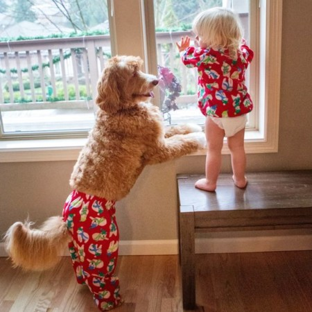Un perro labradoodle y un niño de dos años: la adorable pareja que causa sensación